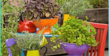 Top 10 plants for sun beds - that sit on the sunny side?